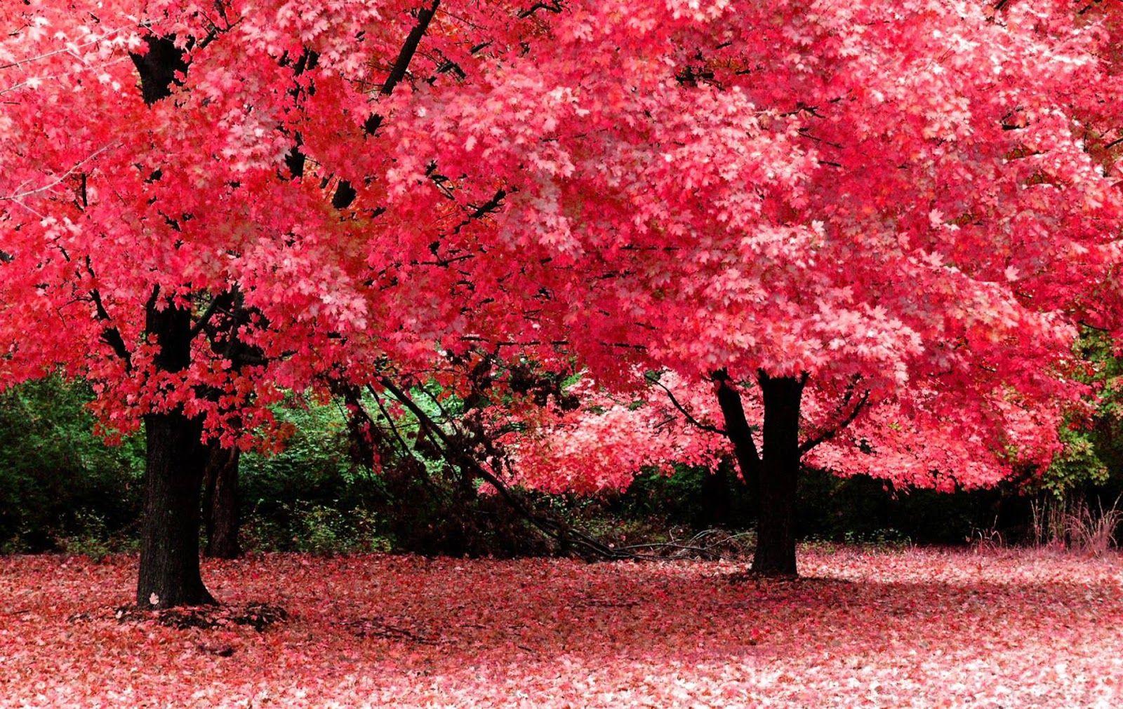 natura albero privamera